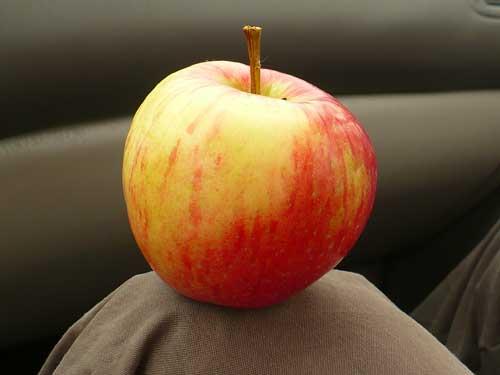 Apple on Knee