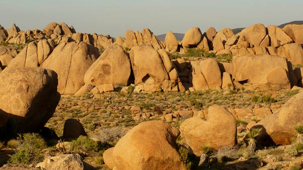 Typical view of rocks at Joshua Tree