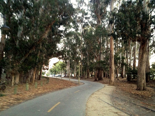 Tree-lined Bike Path