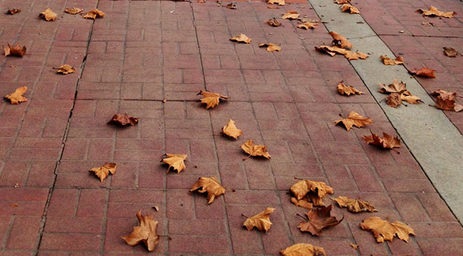 Turn over a new leaf!