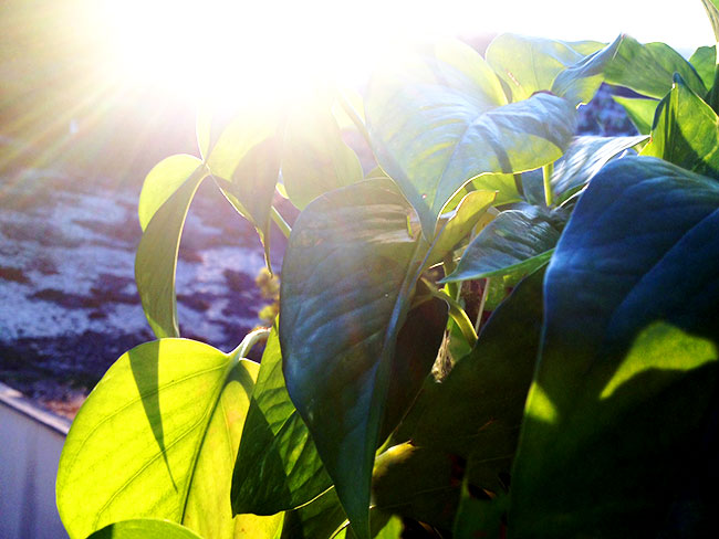 See how bright the future looks when you know you can turn over a new leaf?
